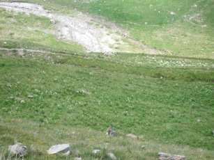 2008 mnt ventoux - alpen 113
